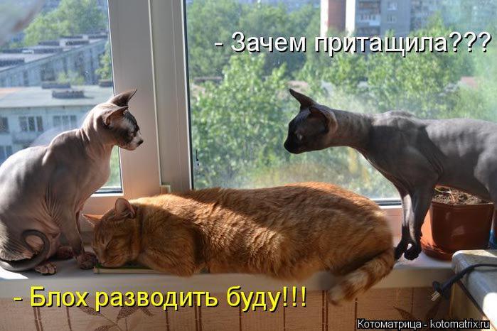 kotomatritsa_ng (700x466, 58Kb)