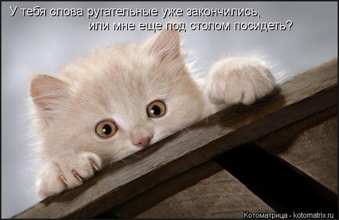 kotomatritsa_ow (700x454, 46Kb)