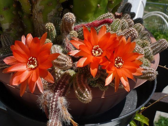 цветы уход фото