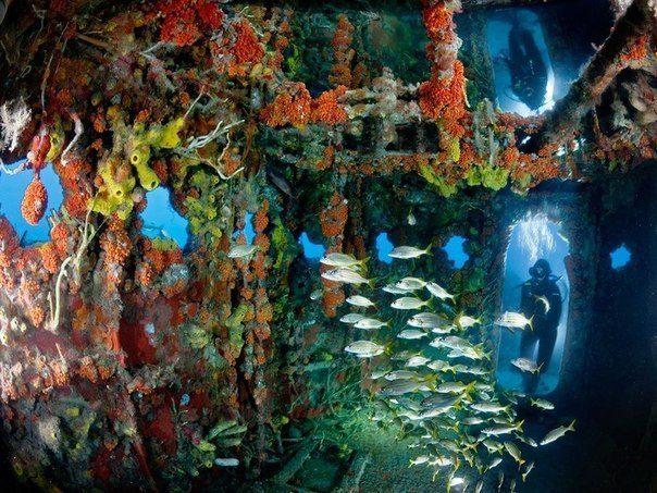 Затонувшее судно, Флорида, США (604x453, 87Kb)