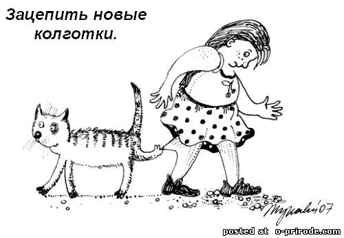 Kot_umet_6 (500x346, 30Kb)