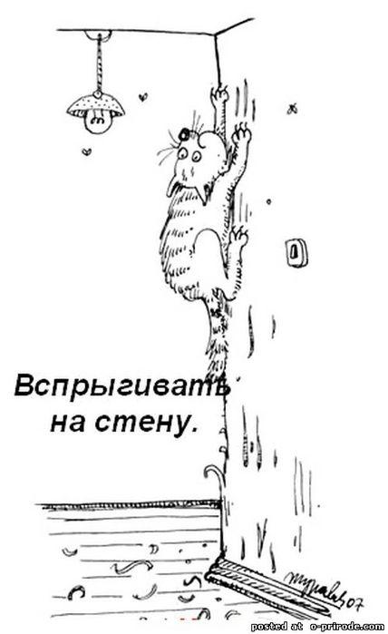 Kot_umet_8 (428x700, 32Kb)