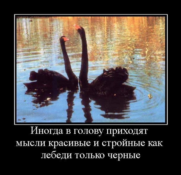 4497432_misli_2_ (610x589, 85Kb)