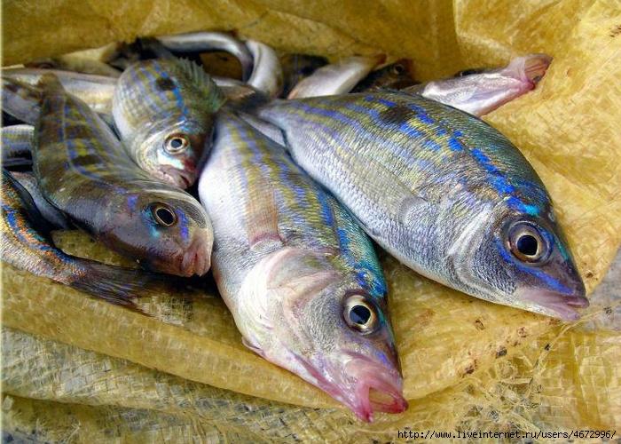 на что можно клюет рыба на черном море