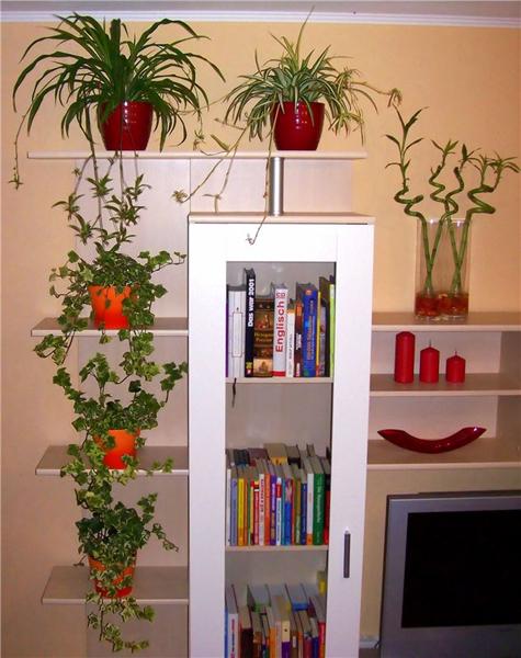 Комнатных растений в интерьере
