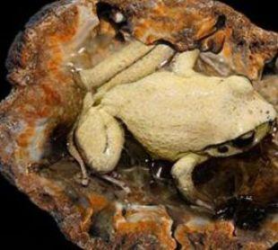 Жабы в камне (310x278, 20Kb)
