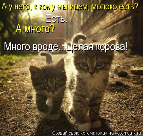 kotomatritsa_A (504x480, 61Kb)