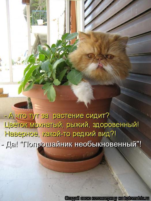 kotomatritsa_Av (524x700, 59Kb)