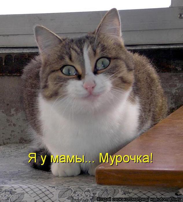 kotomatritsa_gC (633x700, 61Kb)