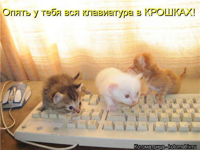 kotomatritsa_LT (640x480, 50Kb)