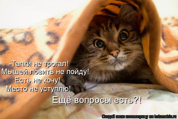 kotomatritsa_r6 (700x466, 50Kb)