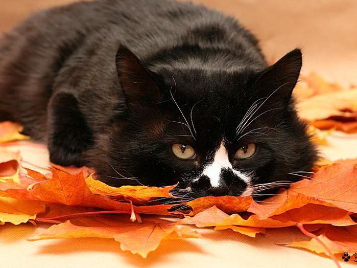 cats_cm_20120120_00139_016 (700x524, 60Kb)