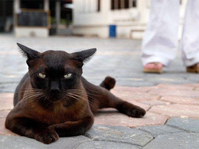 cats_cm_20120120_00139_007 (700x525, 56Kb)