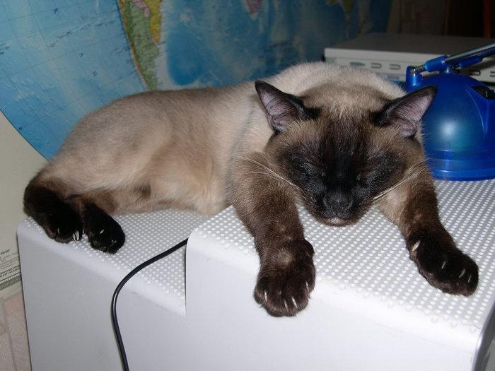 cats_cm_20120120_00139_006 (700x525, 65Kb)