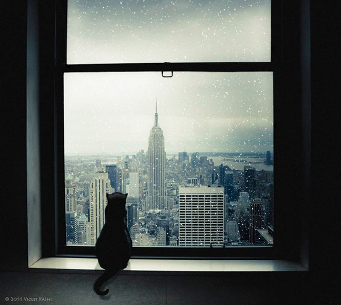 Красивый вид из окна - подборка фотографий разных авторов 19 (700x627, 86Kb)