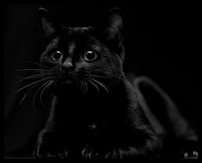 Открытки с черными котами