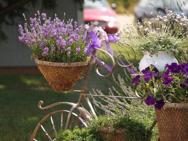 1353148807_lavender_big (650x487, 93Kb)