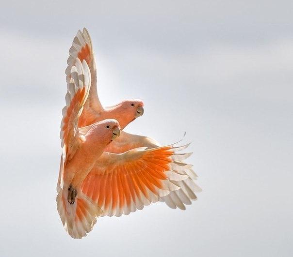 фото папуга (604x531, 27Kb)
