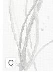 Превью 34 (507x700, 203Kb)
