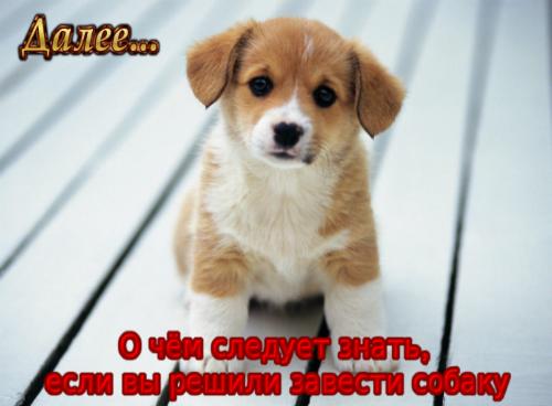 5845504_coollogo_com239863331 (500x368, 394Kb)