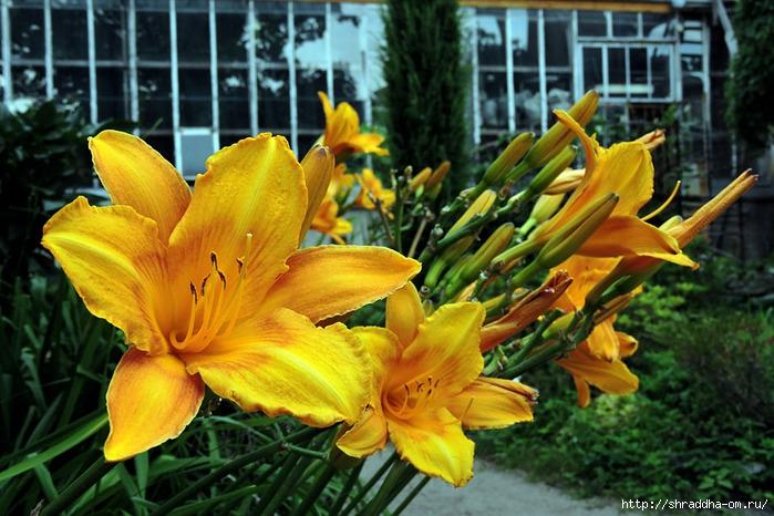 ботанический сад (109) (700x466, 266Kb)