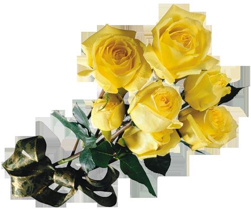 Желтые розы (500x416, 291Kb)