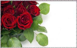 cvety-krasnye-rozy-butony-7471 (320x200, 37Kb)