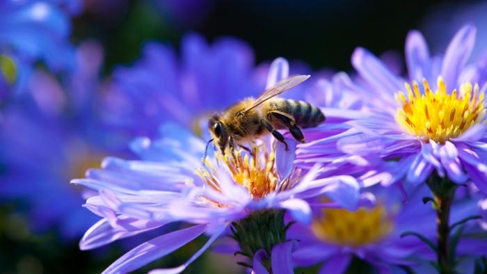 Фото цветы с пчелой