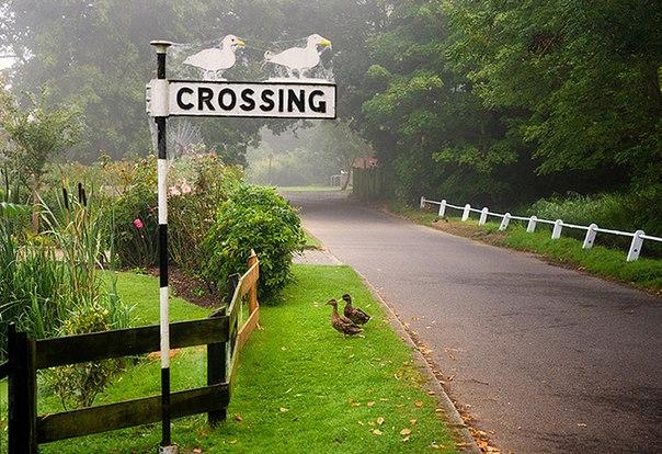 животные переходят дорогу 3 (604x414, 318Kb)