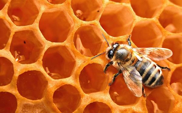 7 видов целебног мёда на Медовый Спас