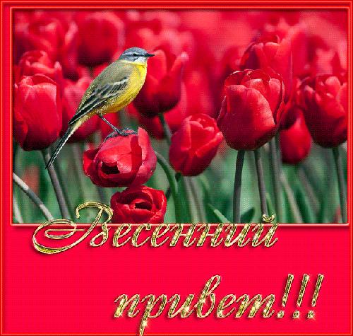 Весенний привет! (500x475, 127Kb)