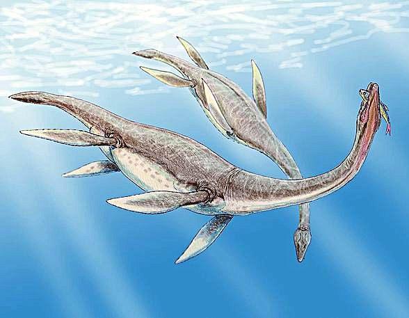 3236062_Plesiosaurus (588x457, 44Kb)