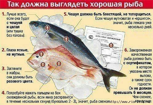рыба (498x342, 181Kb)