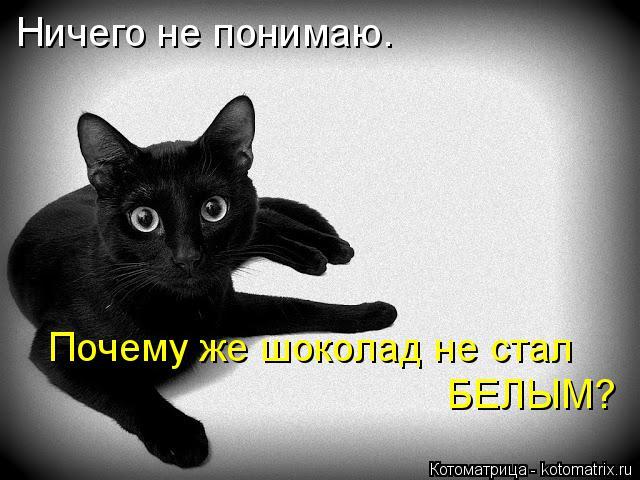 kotomatritsa_0 (640x480, 176Kb)