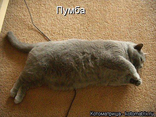 kotomatritsa_1W (500x375, 280Kb)