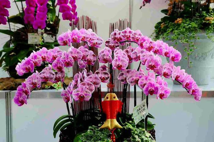орхидея (700x464, 66Kb)