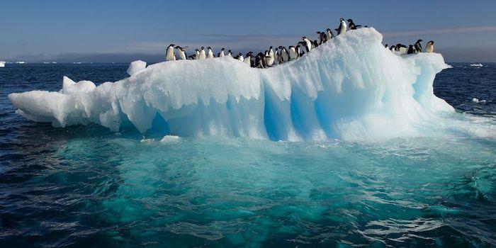 Antarktida/1868538_Antarktida (700x350, 40Kb)
