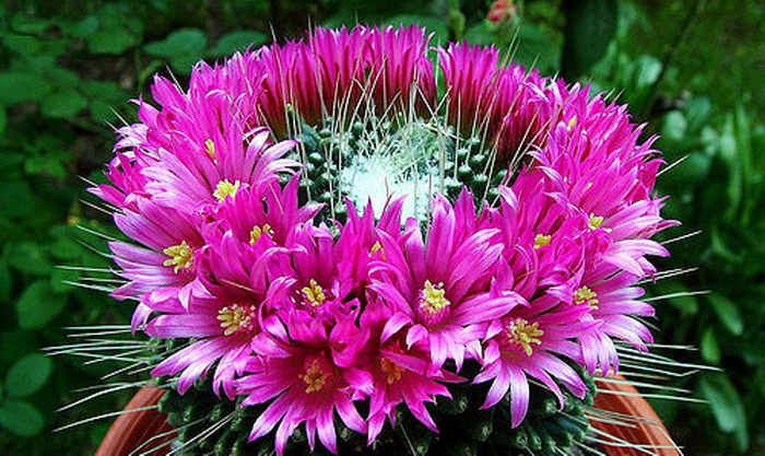 Интересные цветы 2