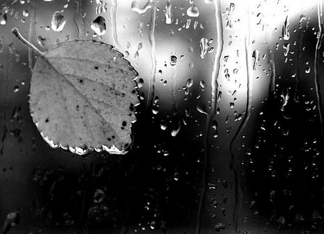 rain (650x469, 98Kb)