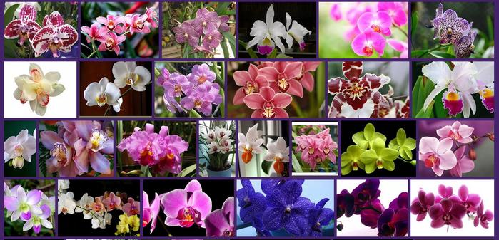 3925311_orhidei (700x337, 436Kb)