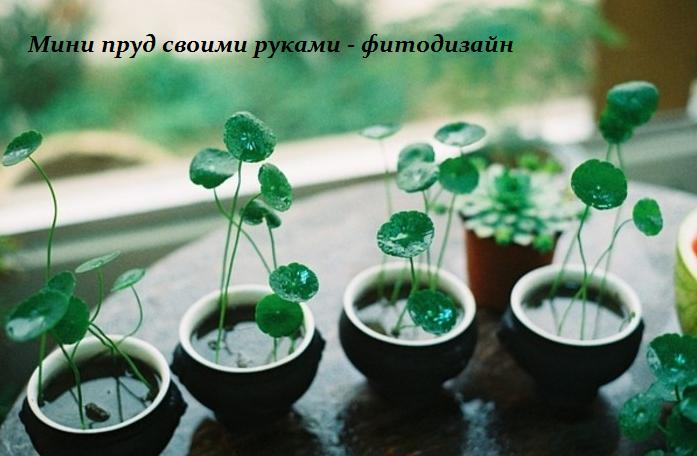 1440417448_Mini_prud_svoimi_rukami__fitodizayn (697x456, 476Kb)