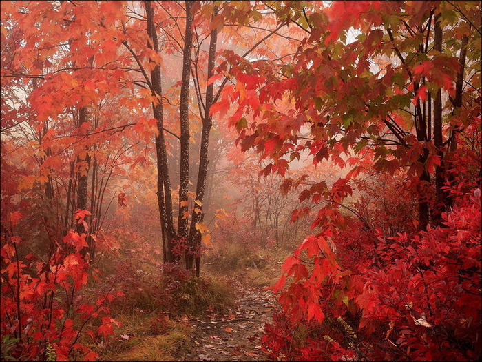 1321167086_autumn-colours-31_resize (700x525, 212Kb)