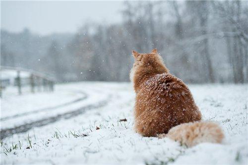 кот зимой (600x400, 26Kb)