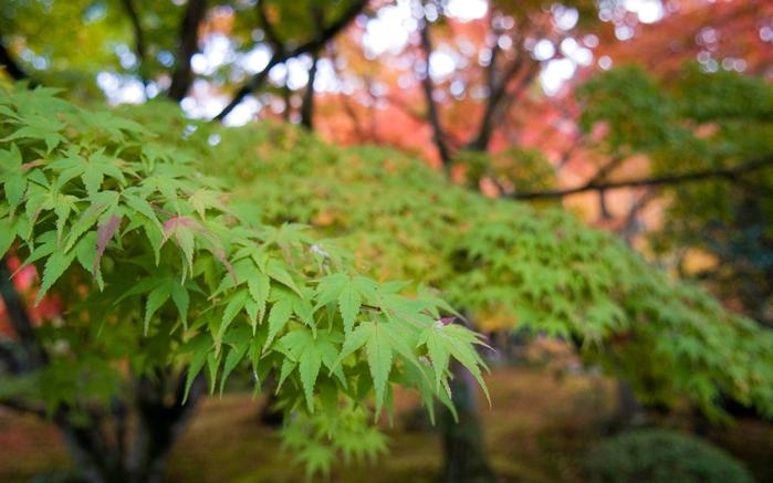 Красоты японского сада (44 фото) .