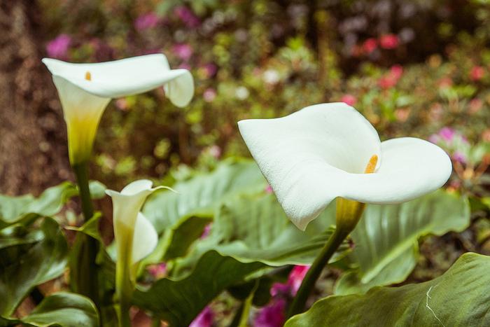 Jardim Tropical Monte Palace Мадейра 17 (700x467, 167Kb)