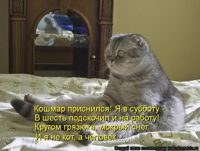 kotomatritsa_5n (700x529, 58Kb)