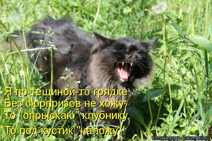 kotomatritsa_9o (700x466, 85Kb)