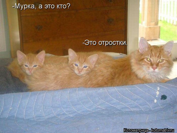 kotomatritsa_ck (700x525, 47Kb)