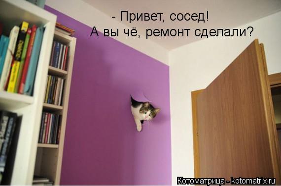 kotomatritsa_im (570x379, 27Kb)