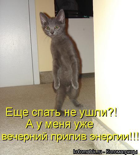 kotomatritsa_K7Q (453x500, 37Kb)